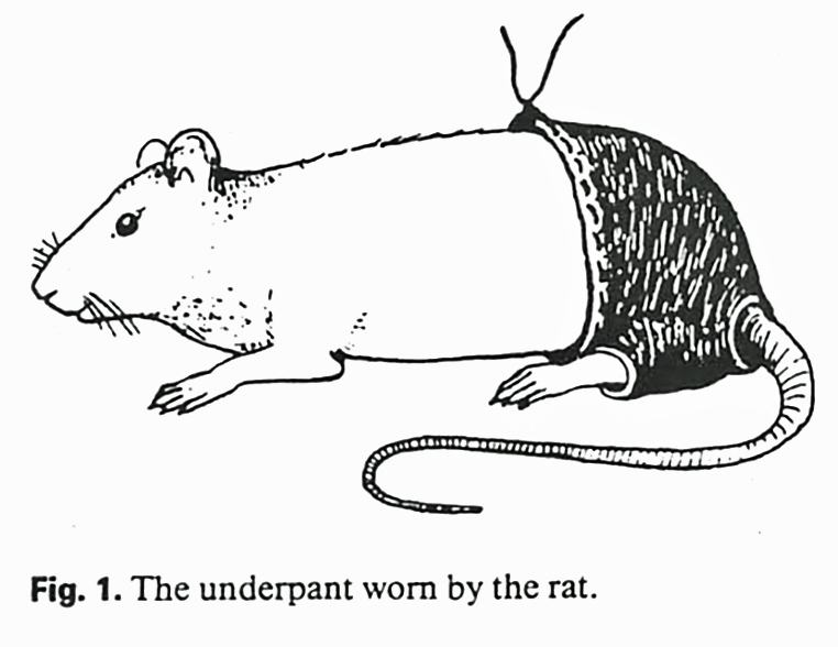 the_underpant_worn_by_the_rat_web